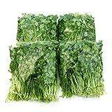 千葉県産 パクチー 生野菜 鮮度保持フィルム包装 2kg クール便