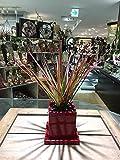 ドラセナ・レインボー 観葉植物 鉢植え ヴィヴィドレッドポット