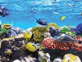 JPロンドンpmurlt2384接着剤付き取り外し可能な壁壁画Undersea Coral Reef Find魚Nemo、4' x 3'