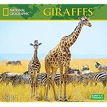 National Geographic Giraffes 2019 Wall Calendar