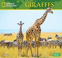 National Geographic Giraffes 2019 Calendar
