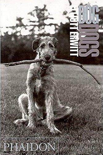 Dog Dogsの詳細を見る