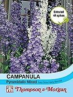 HIGH発芽SEEDSだけでなくPLANTS:トンプソン&モーガン - フラワーズ - カンパニュラPyramidalisのミックス - 300種