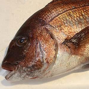 瀬戸内海産 鯛 (養殖)1kg 活き締め