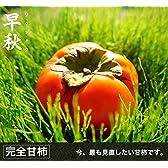 柿 ( カキ ) 苗 早秋(ソウシュウ) 1年生 接ぎ木 苗 果樹苗木 果樹苗