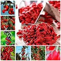 1000個Gojiベリー中国Wolfberry盆栽ハーブ盆栽鉢植えホームガーデン屋外ハウス植物、人気Heathy:200pcs - Wolfberry