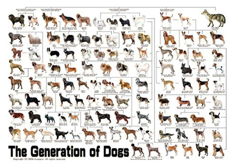 犬の系統図Ver3 A1サイズ The generation of dogs