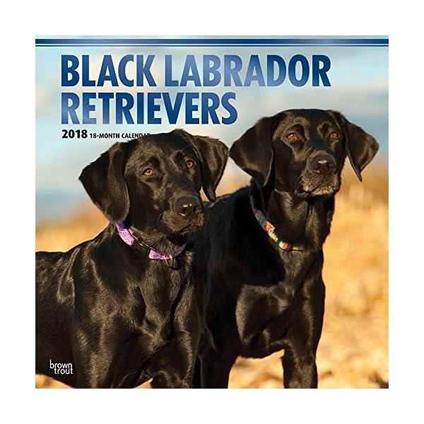 Black Labrador Retriever...の商品画像