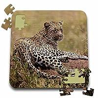 Danita Delimont–チャールズ・Sleicher–Big Cats–アフリカ、タンザニア、Serengeti。ヒョウ、豹。–10x 10インチパズル( P。_ 187477_ 2)