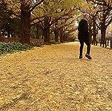 或る秋の日(受注生産限定盤)