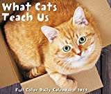 What Cats Teach Us 2019 Calendar
