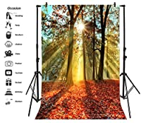 leyiyi 5 x 7ft写真Backgroud Autumn Park Backdrop Maple Leaves Fallen National Forest Garden Nature Wild TreesユーカリSunlight Wonderハイキング自撮りフォトPortraitビニールStudioビデオProp