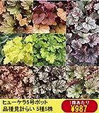 【宿根草】ヒューケラ品種名付き 5種5株
