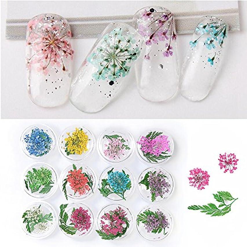 屋内ですべき常習者Takarafune 押し花 ドライフラワー 葉 3Dネイル レジンデコレーション DIY ネイルパーツ 明収納ケース 12色