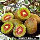 国華園 果樹苗 キウイ 選抜紅妃&早雄 2種2株