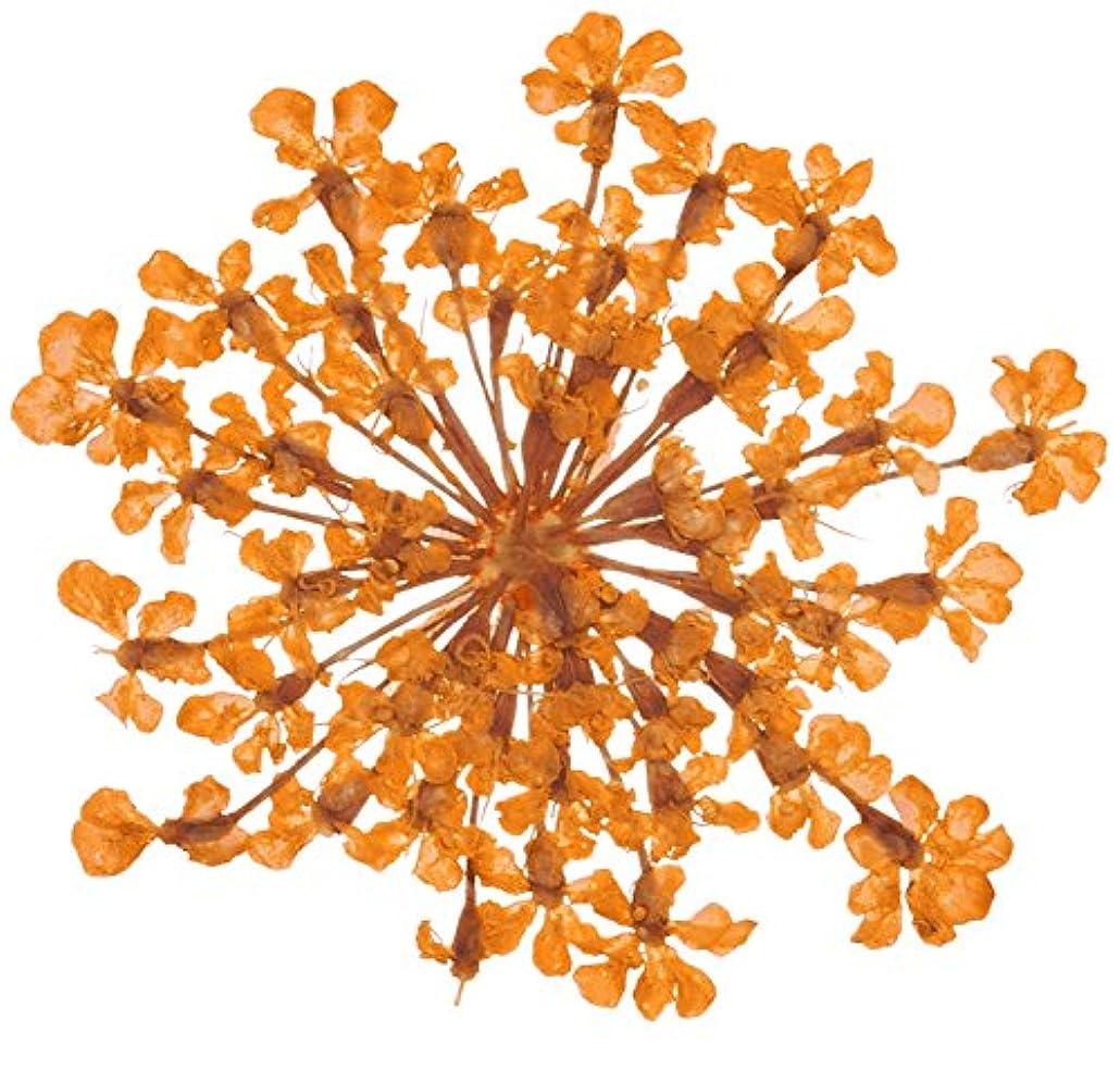 彫刻家ホステル市の花ベィビーズブレス BB-7 オレンジ 約10枚