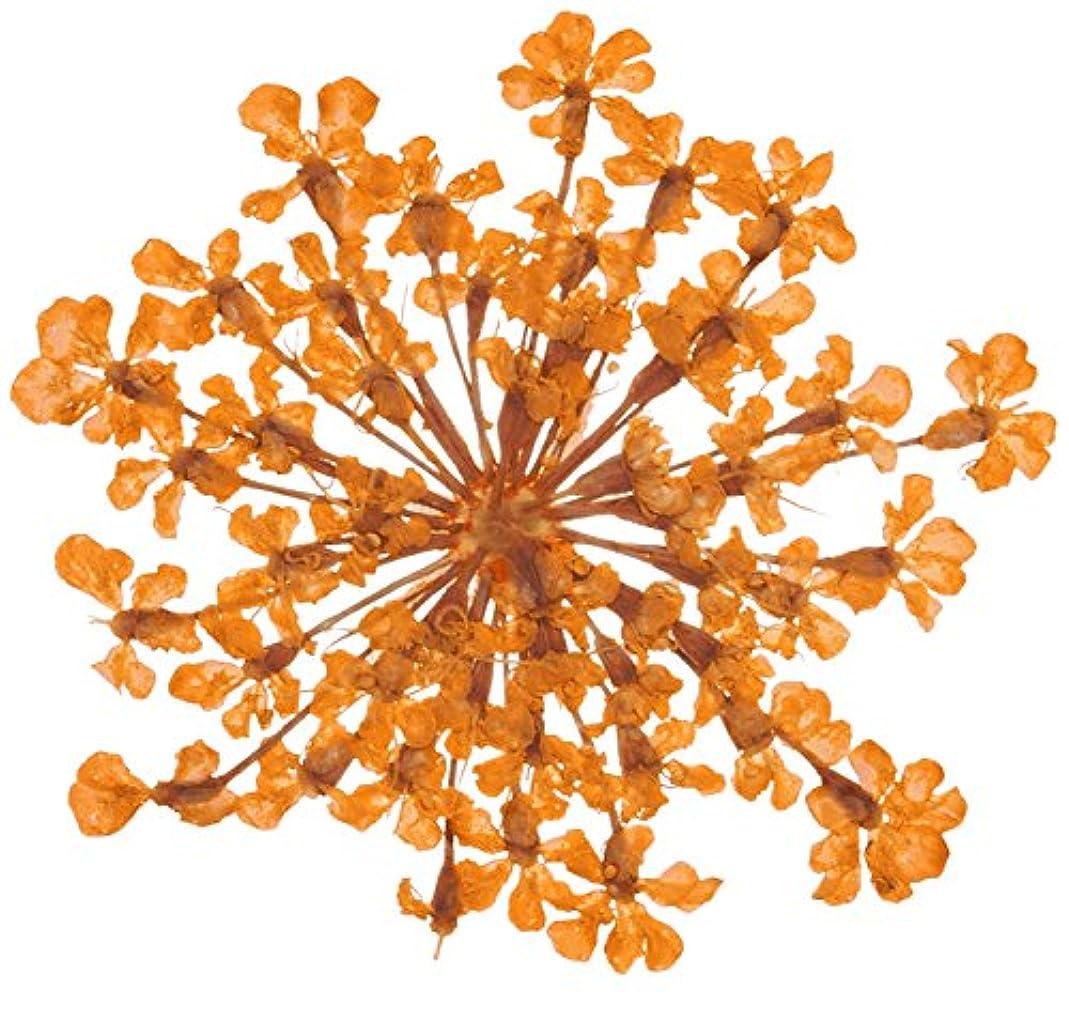 一目記念のどベィビーズブレス BB-7 オレンジ 約10枚