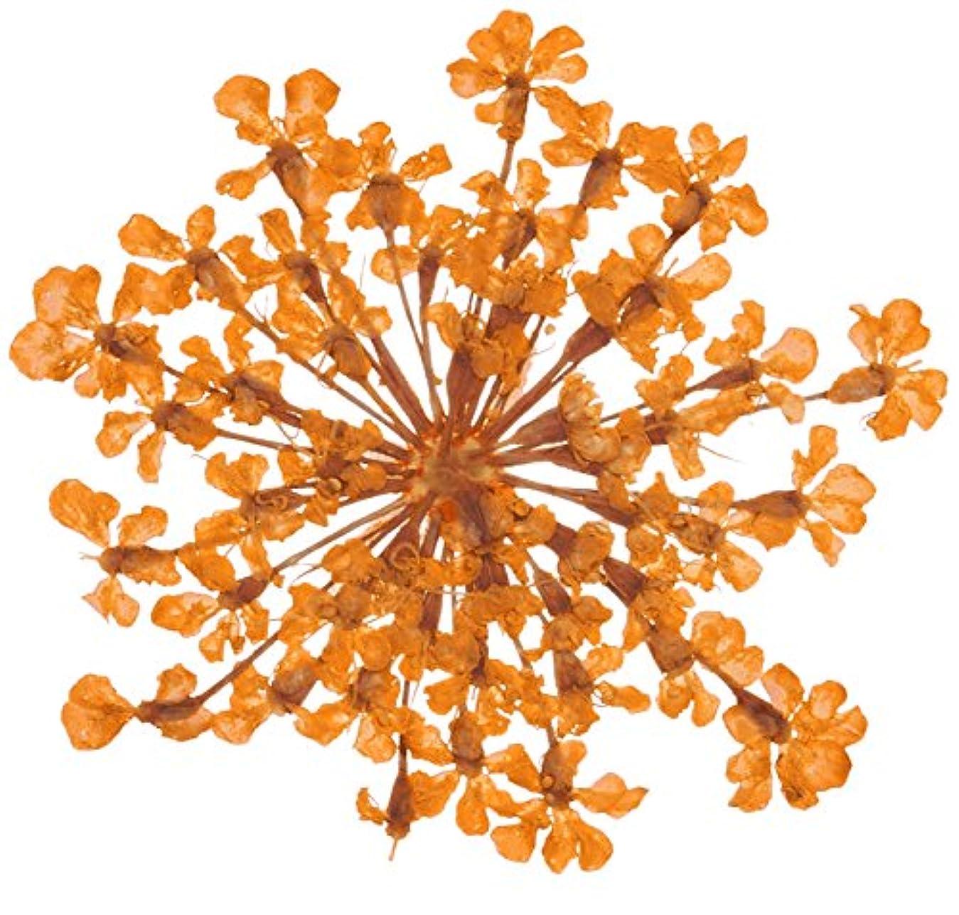 変色する不利益多分ベィビーズブレス BB-7 オレンジ 約10枚