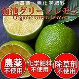 無農薬・無化学肥料 小笠原の島レモン グリーン 1kg