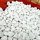天然石 玉石砂利 3-4cm サンプル スノーホワイト (ガーデニングに最適 白色砂利)