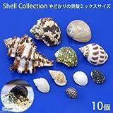 (海水魚 貝殻)やどかりの貝殻 ミックスサイズ おまかせ(殻口3~20mmミックス)(10個)(形状おまかせ) 本州・四国限定[生体]