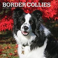 Border Collies 2019 Calendar