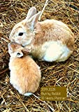 10 Years Planner 2019-2028 A4 Bunny Rabbit Goals Monthly Schedule Organizer: 120 Months Calendar; Ten Years Planner; Agenda Appointment Diary Journal With Address Book, Password Log, Notes, Julian Dates & Inspirational Quotes