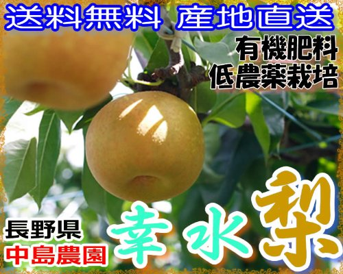 産地直送 低農薬・有機肥料栽培 長野県 中島農園の幸水梨 12〜15玉約4.5kg産地箱入 贈答用