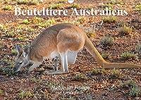 Beuteltiere Australiens (Wandkalender 2020 DIN A3 quer): Ausdrucksvolle Bilder einiger Beuteltierarten Australiens,  in freier Wildbahn fotografiert (Monatskalender, 14 Seiten )
