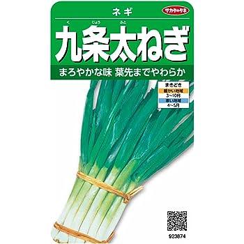 サカタのタネ 実咲野菜3874 九条太ねぎ ネギ 00923874