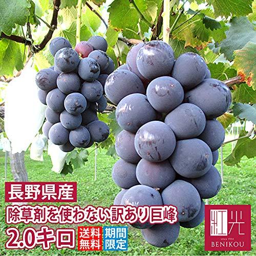 【訳あり】長野県生坂村 完熟巨峰 中箱(...