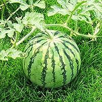 バルコニー実夏Sementesと野菜の盆栽病 - 耐性盆栽Waternガーデン簡単に10個入り