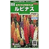 【種子】ルピナス ラッセルミナレットミックス 小袋