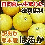 熊本産 訳あり はるか 5kg  【 九州 熊本 みかん ミカン ハルカ オレンジ 柑橘 】