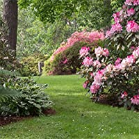 lfeey 8x 8ft Countryside Garden写真バックドロップ田舎景色美しい春の花草原の背景旅行写真ブース小道具