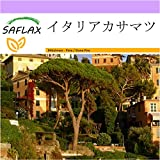 SAFLAX - イタリアカサマツ - 6 個の種。 - Pinus pinea