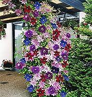 盆栽の花の電子盆栽花の盆栽ポットガーデン100個/袋:3