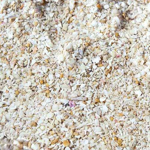 (海水魚 サンゴ砂)バクテリア付き ライブアラゴナイトサンド(約3L) 海水水槽用底砂 本州・四国限定[生体]