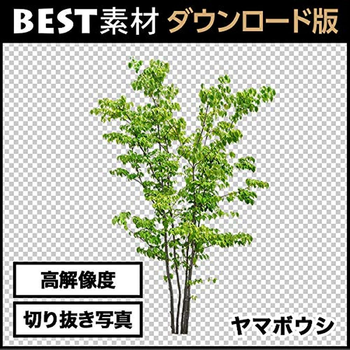 追い出す舗装する典型的な【BEST素材】高解像度の切り抜き写真_ヤマボウシ02 ダウンロード版