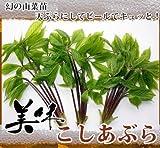 【 幻の 山菜苗 】コシアブラ 株立ち 根巻き大苗 果樹苗木 果樹苗