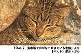 シンフォレストDVD 世界遺産の猫たち Cats of the World Heritage 画像