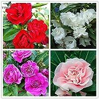 A041:ホームグラムのための庭のバルサム白、ピンク、赤紫のインパチェンスBalsamina盆栽花