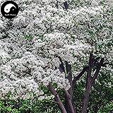 発芽SEEDS:15pcs:購入タッセルツリー種子植物ヒトツバタゴRetusus劉シュウツリー