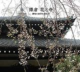 鎌倉 花と寺 ~歴史と四季を訪ねて~