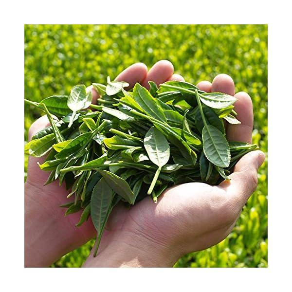 伊藤園 おーいお茶 緑茶 2L×9本の紹介画像3