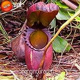 ビッグセール!ウツボカズラ種子バルコニー鉢植え盆栽の植物の種子盆栽食虫植物の種50種/パック、#のHABOGO