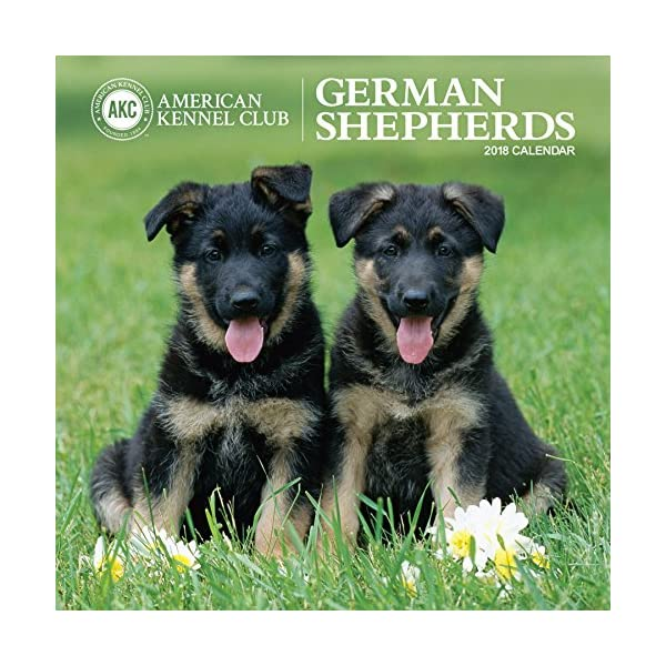 German Shepherds America...の商品画像