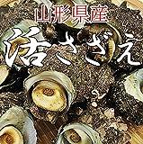 サザエ 1kg (14?18個) 山形県産 冷蔵 バーベキュー 海鮮 さざえ 刺身 生食用 お中元