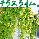 イポメア:テラスライム3号ポット 6株セット[サントリーの夏を涼しく彩るクールグリーンカーテン!]