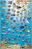 Okinawa Japan Dive Map & Reef Creatures Guide Franko Maps Laminated Fish Card